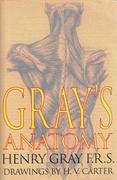 Anatomy Giants S  None detail